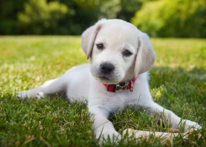 puppy puppy puppy puppy puppy