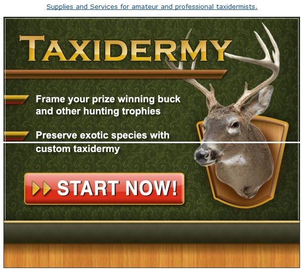 amateur taxidermy supplies